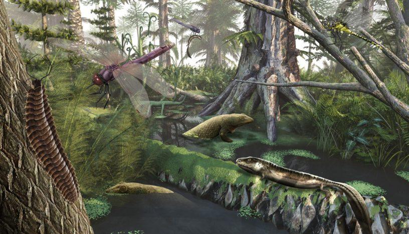 Forêt du Carbonifère